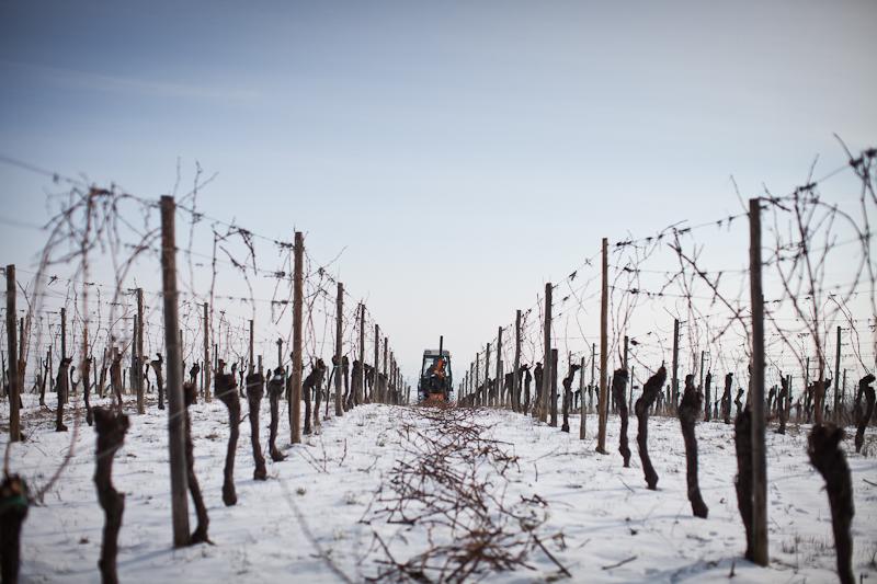 Nos vignes en hiver - Nos vins